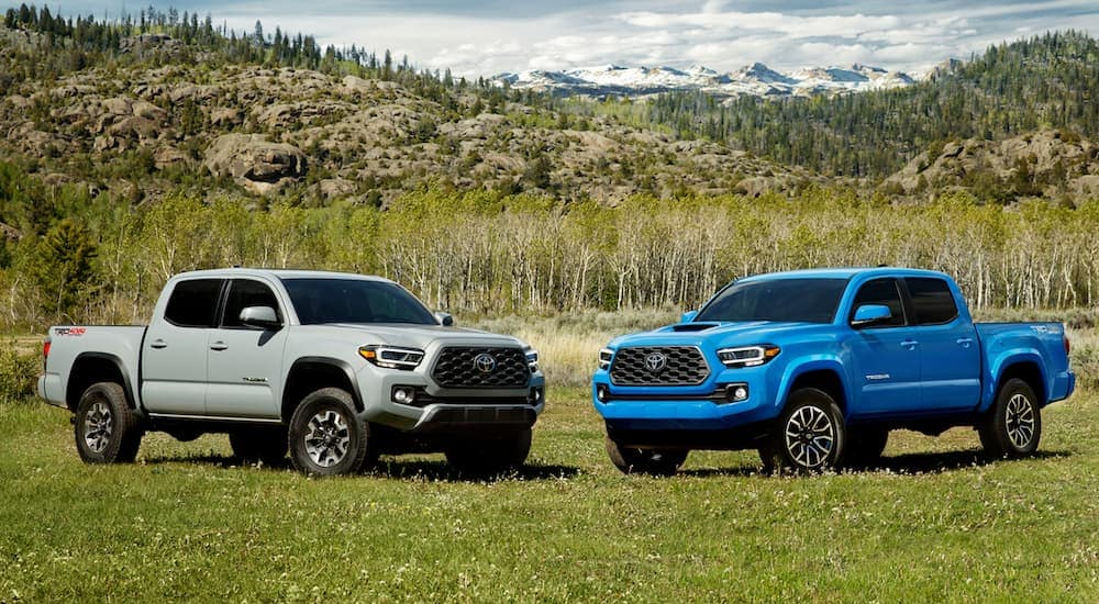A silver 2020 Toyota Tacoma is parked next to a blue one, which are popular Toyota models, in front of distant mountains.