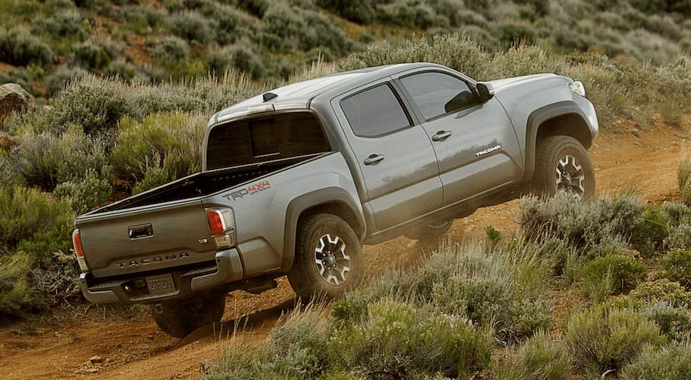 A grey 2021 Toyota Tacoma, a popular Toyota pickup truck, is driving on a dirt road past shrubs.