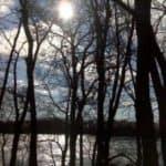 trees-300x225